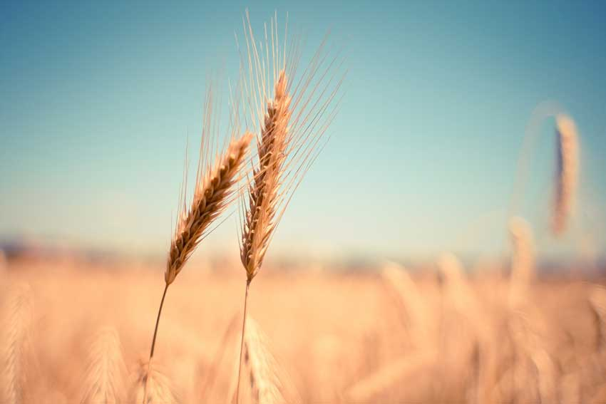 FDN Life Magazine - Issue 4 - SUSTAINABLE PRACTICES & NUTRITIONAL VALUE OF SPENT GRAIN