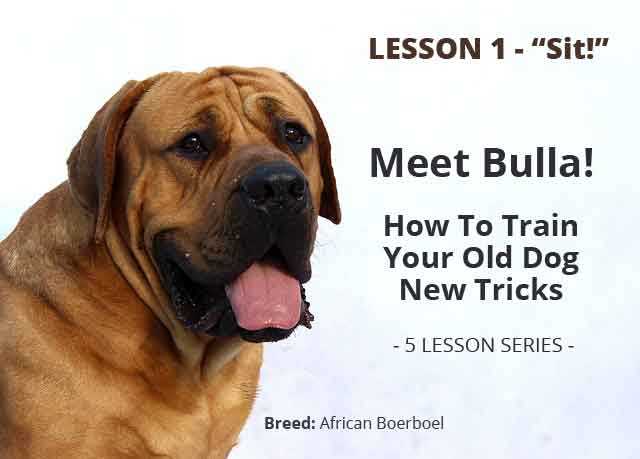 PETS > Teaching Your Old Dog New Tricks - Lesson 1: Sit